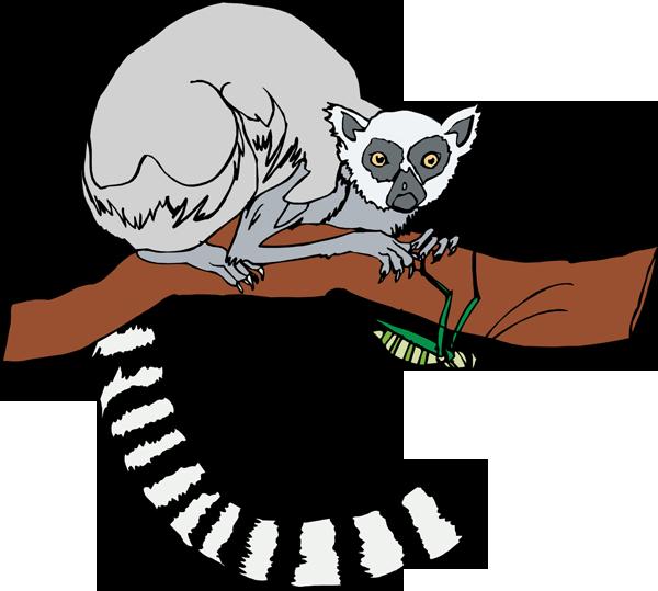 lemur clipart clipart panda free clipart images Lemur Vector lemur clip art black and white