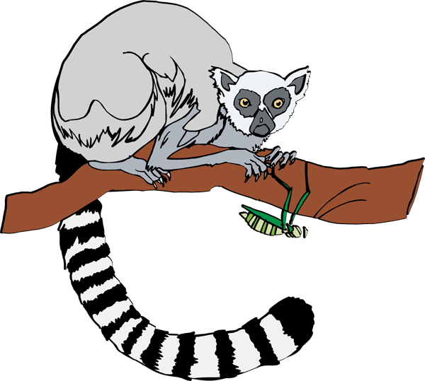 ring tailed lemur clipart panda free clipart images lemur clipart black and white lemur clipart free
