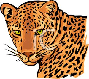 the face of a leopard clip art clipart panda free clipart images rh clipartpanda com snow leopard clipart leopard clipart black and white