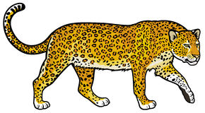 leopard clipart clipart panda free clipart images rh clipartpanda com snow leopard clipart leopard clipart black and white