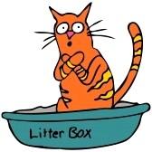 Licking The Litter Cat