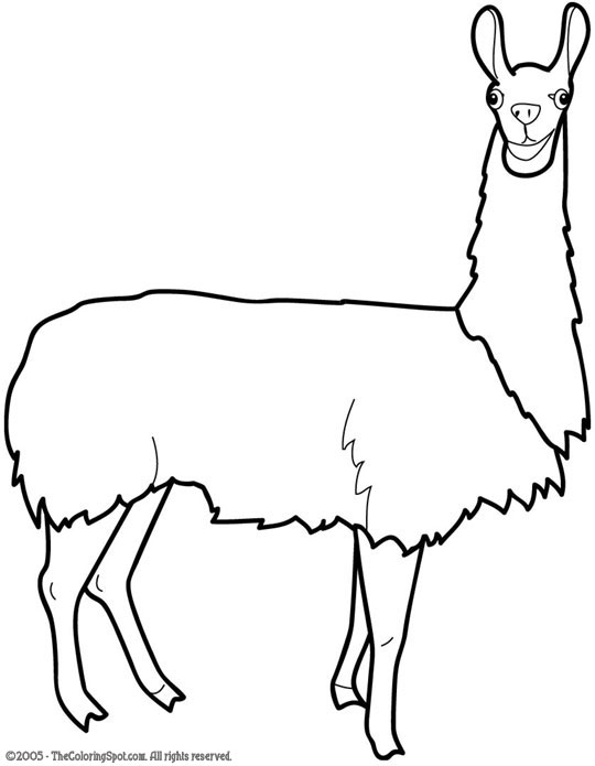 Llama Clipart Black And White llama clipart 11 540x6...