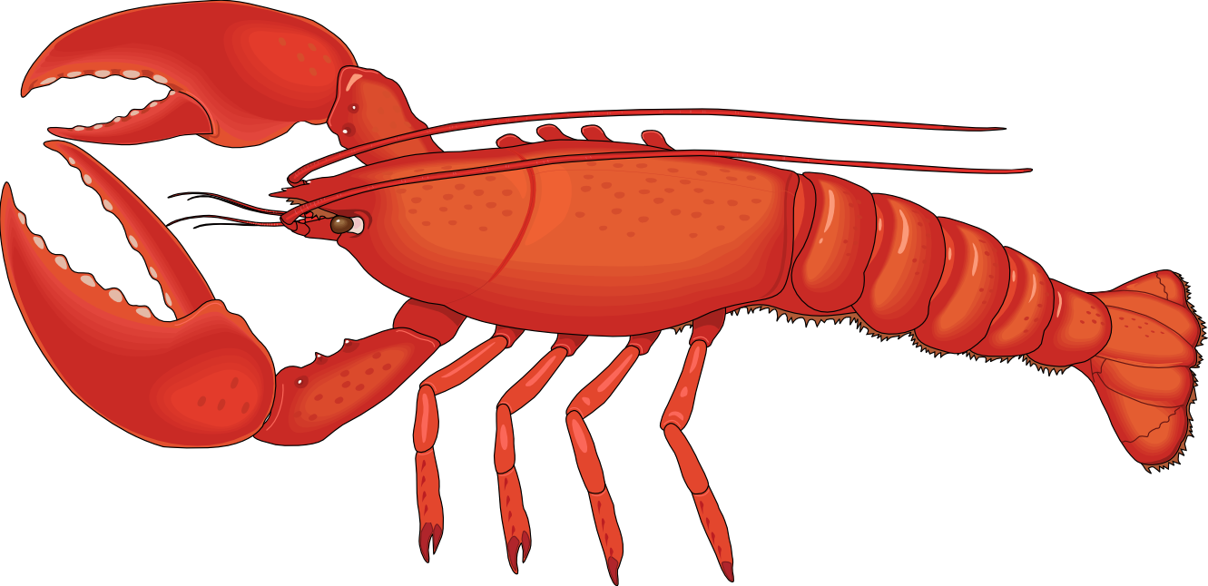 Lobster Clip Art Lobster clip art