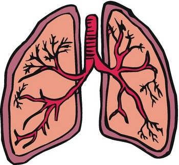 lungs clip art clipart panda free clipart images rh clipartpanda com lungs clipart healthy lungs clipart