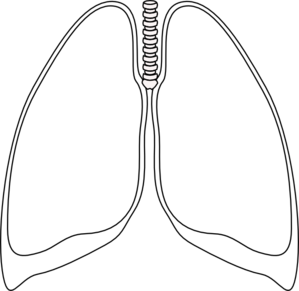 Lung Clear Lung Clip Art 29483357 likewise Elefant Duscht Sich besides Turner Syndrome likewise 450641506437358212 likewise ViewQuestionsPublic. on 291