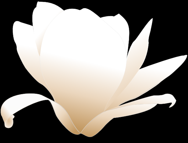 magnolia-flower-clip-art-free-vector-magnolia-white-clip-art_115274 ...