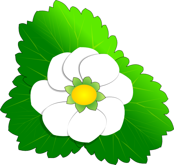 Green Flower Line Drawing : Magnolia flower clip art clipart panda free images