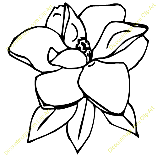 Image Gallery Magnolia Outline