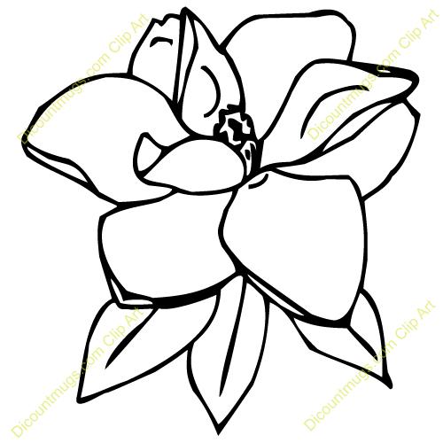 magnolia blossom clip art - photo #28