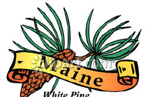 Maines State Flower Maine 20clipart...