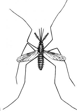 malaria%20clipart
