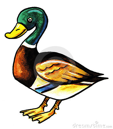 Mallard Clipart Free | Clipart Panda - Free Clipart Images