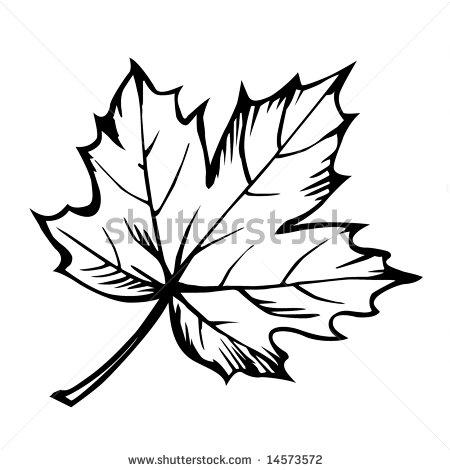 Maple Leaf Clip... Japanese Maple Leaf Drawing