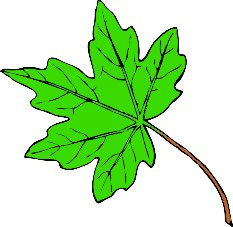 Free maple-leaf... Free Clip Art Maple Leaf
