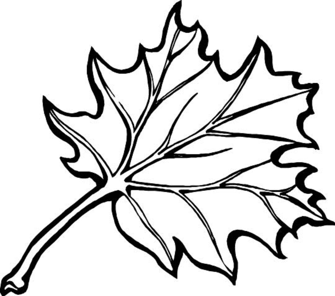 maple leaves coloring pages autumn leaf coloring