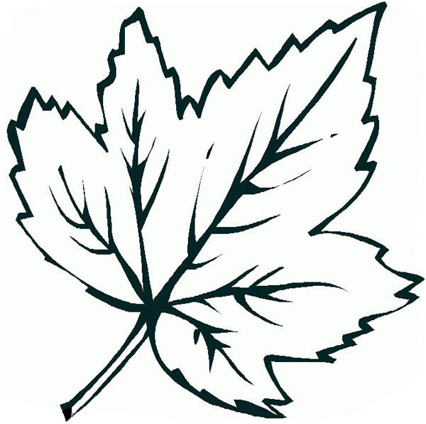 Free Coloring Pages Of Maple Leaves