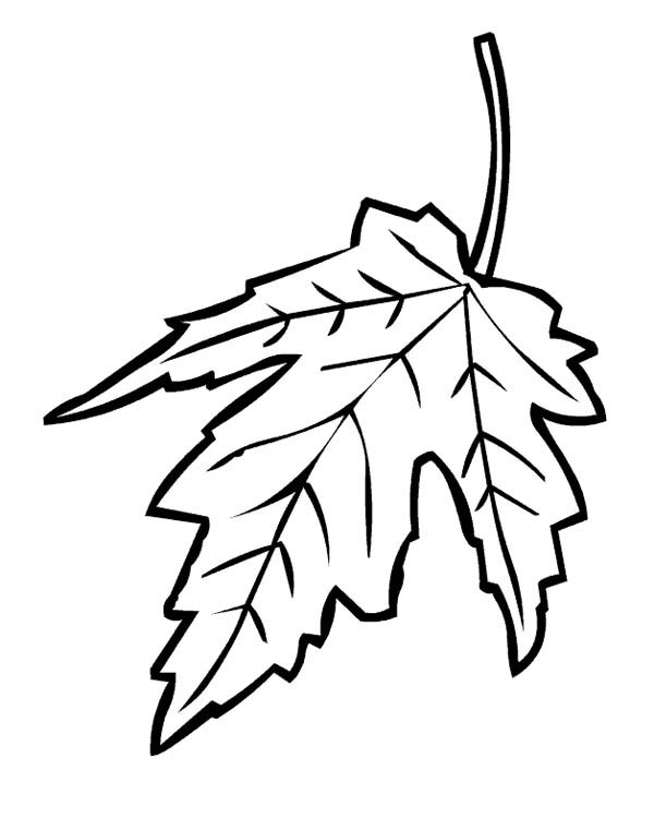 maple leaves coloring pages maple leaf falling from tree coloring page