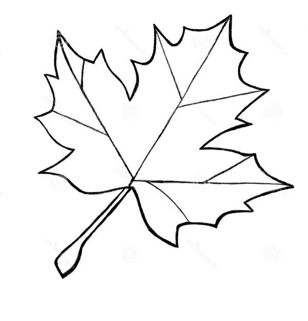 Free Coloring Pages Of Leaf Leaf Colouring Pages