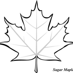 maple%20leaves%20coloring%20pages