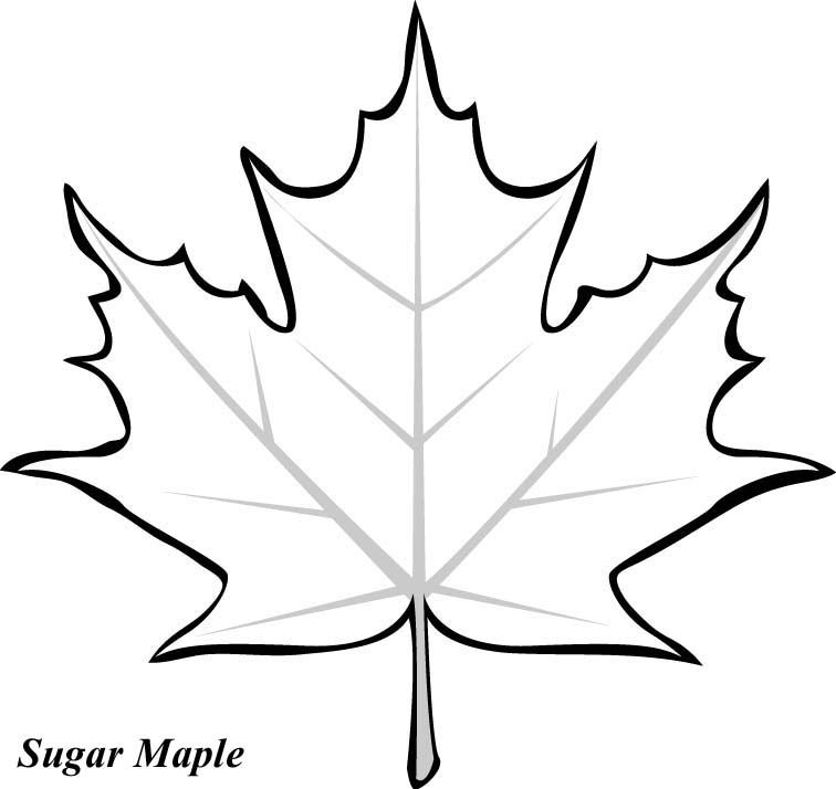 maple coloring pages - photo#31