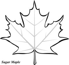 maple leaf to color Clipart Panda Free Clipart Images