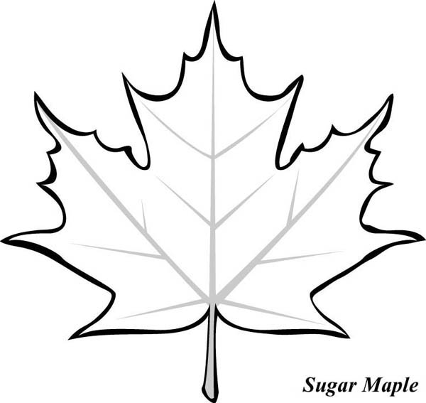 Leaf Outlines Coloring Pages