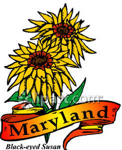 state flower of maryland clipart panda free clipart images