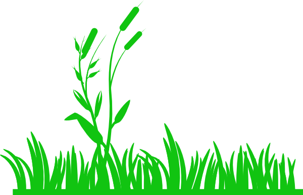meadow 20clipart clipart panda free clipart images seaweed illustration vector seaweed vector images