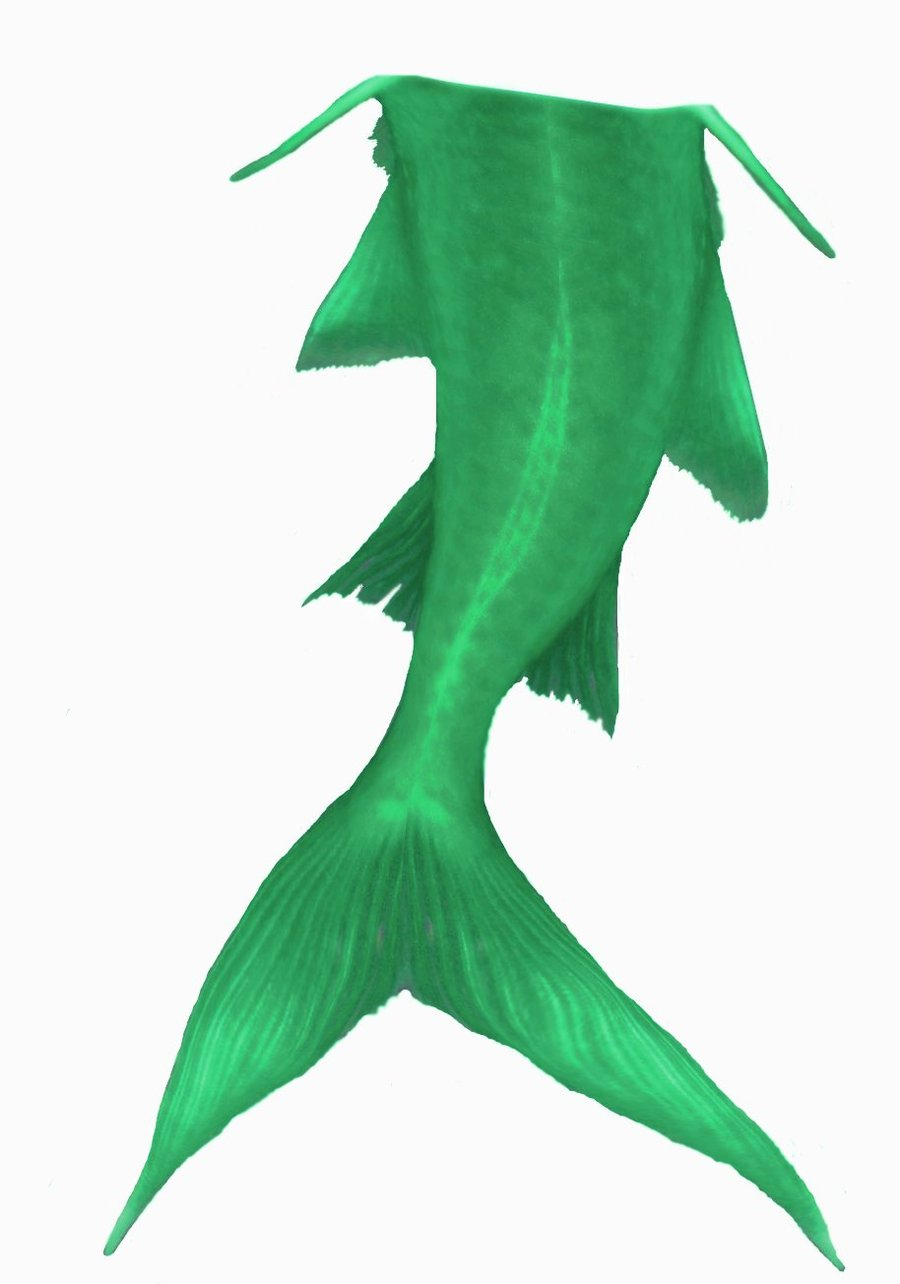 mermaid tail clipart clipart panda free clipart images