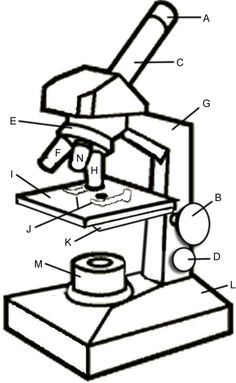 Microscope Drawing Worksheet microscope 20drawing