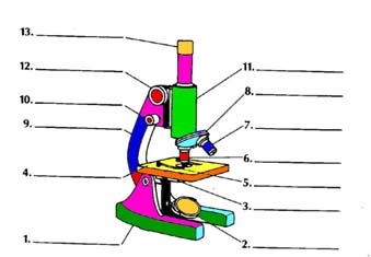Microscope Diagram Clipart Panda Free Clipart Images