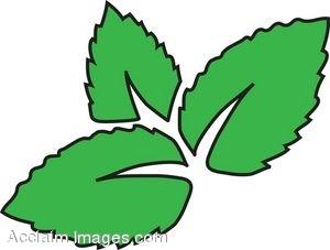 Mint Leaves Clip Art at Clkercom  vector clip art online