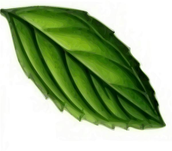 Mint clipart...... Oak Leaf Pictures Clip Art