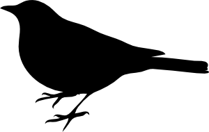 mockingbird clipart clipart panda free clipart images rh clipartpanda com black mockingbird clipart mockingbird clipart black and white