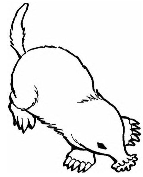 Mole Coloring Page