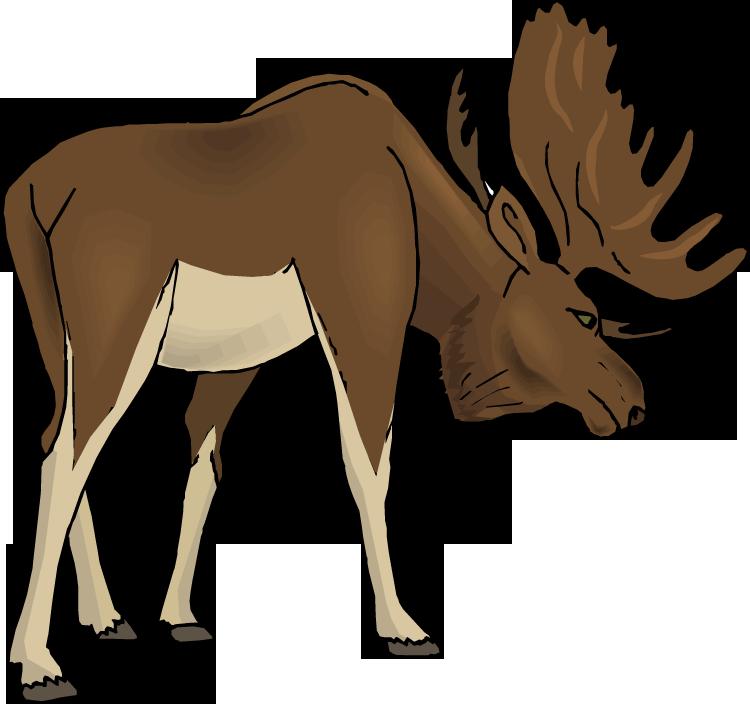 Free clip art moose