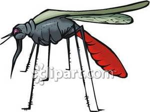Mosquito Clip Art | Clipart Panda - Free Clipart Images