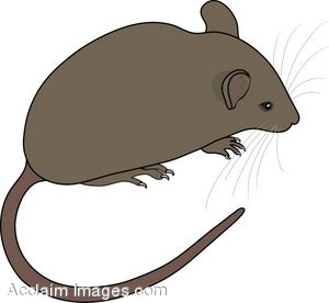Mouse clip art to download for free clipart panda free for Field mouse cartoon