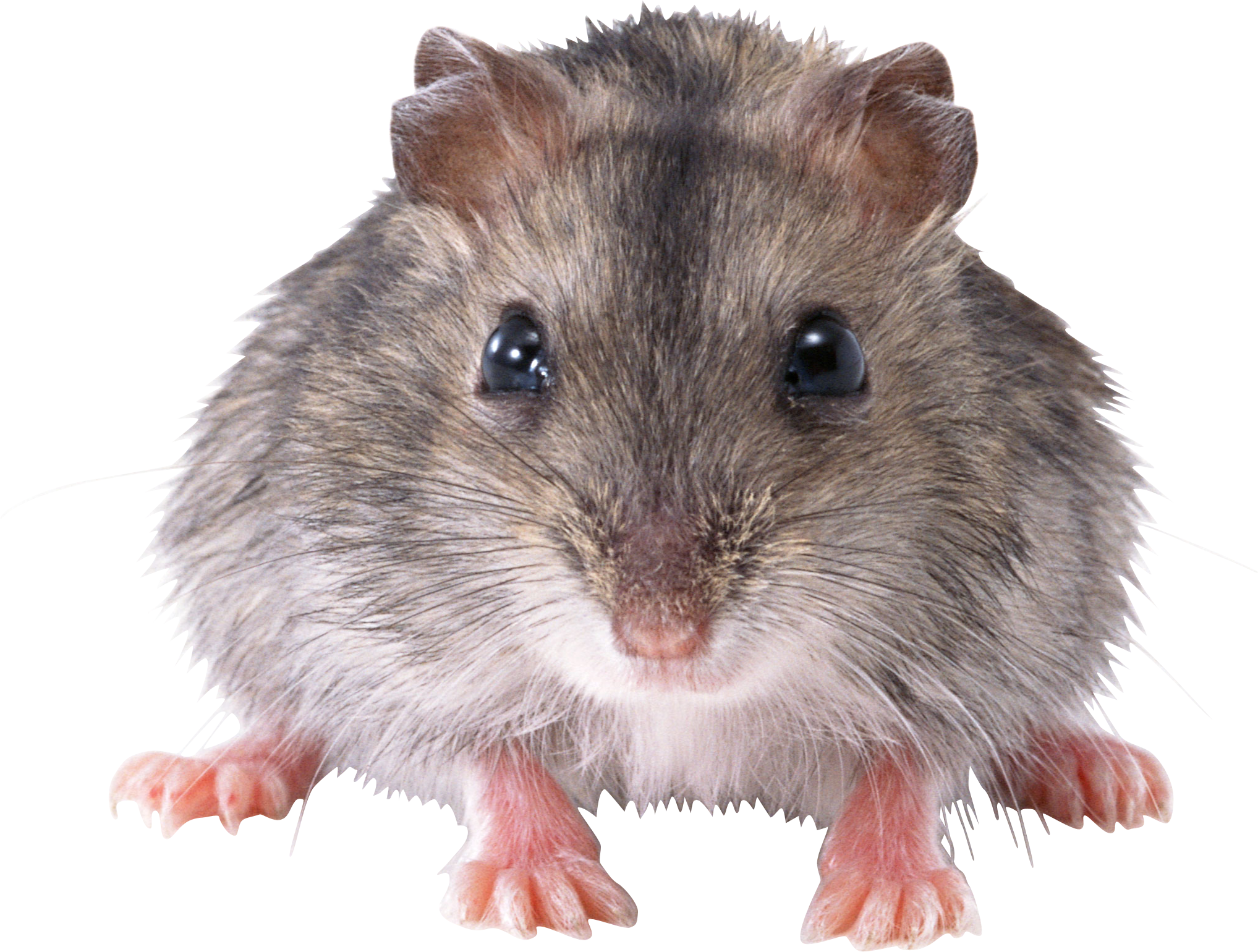 mouse, rat PNG image | Clipart Panda - Free Clipart Images