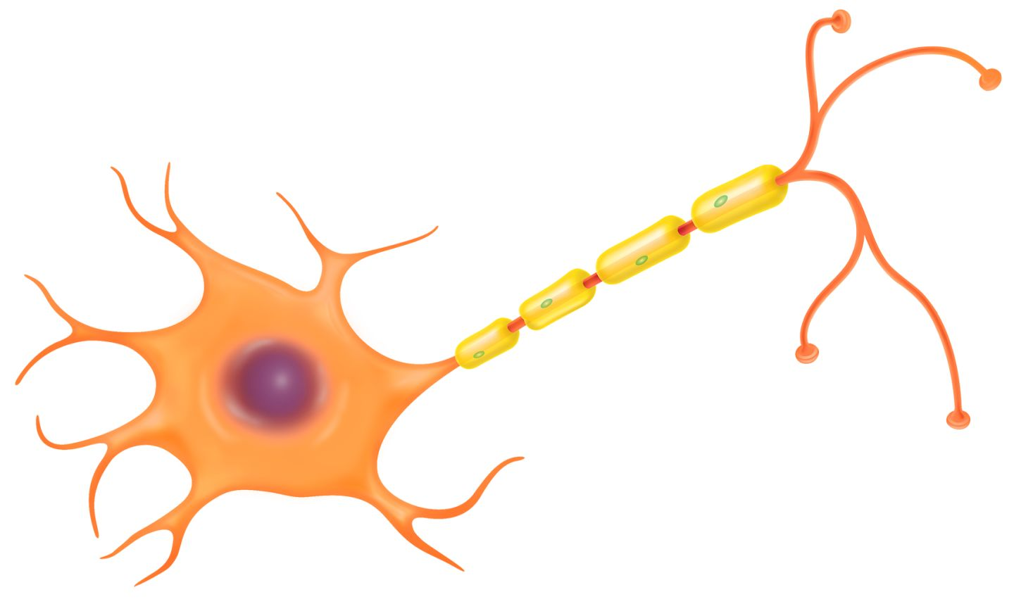 human cell clipart - photo #45