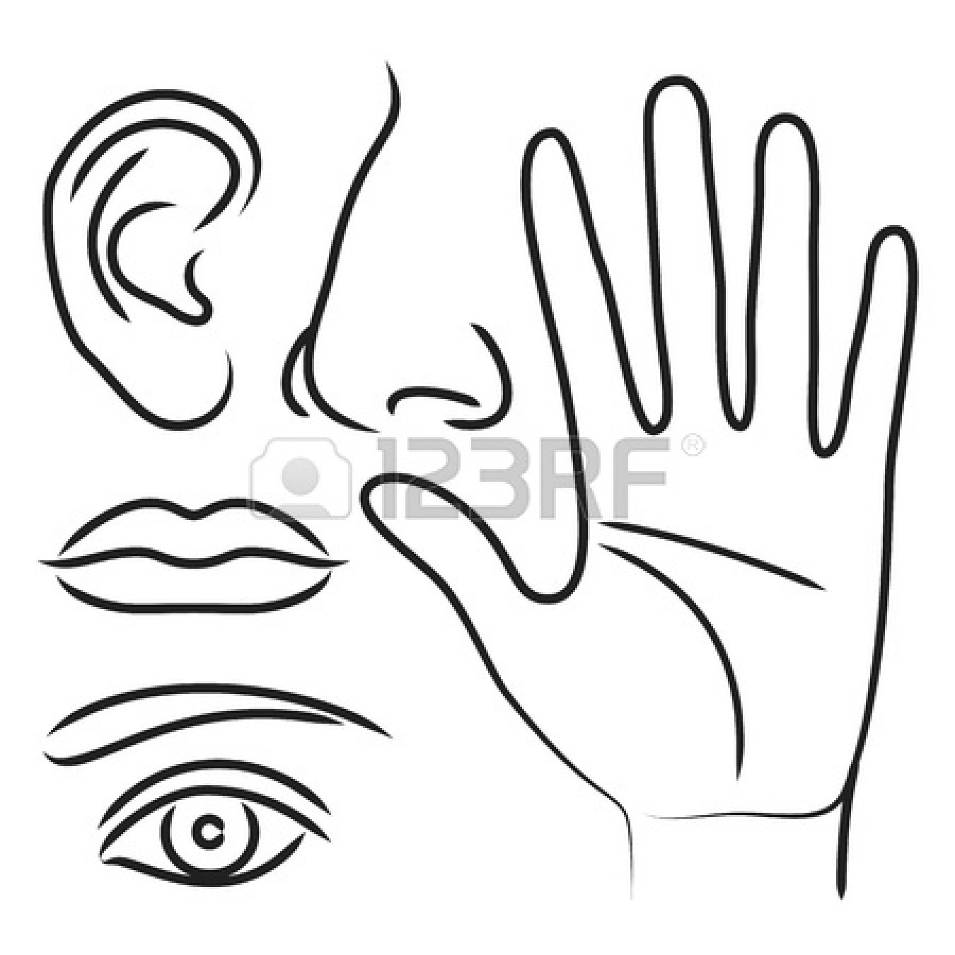 Free Coloring Pages Of Eyes Ears Mouth Nose