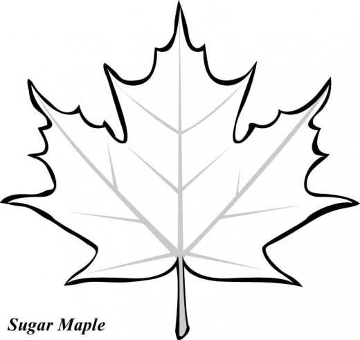 oak leaf coloring pages - photo #32