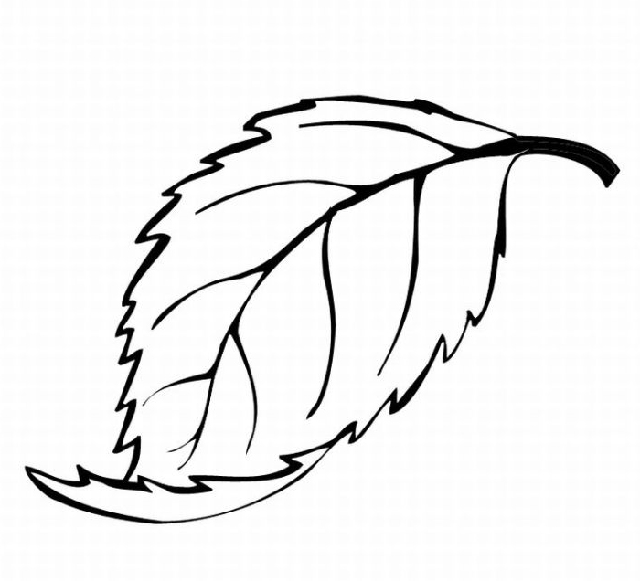 Oak Leaves Coloring Pages Clipart
