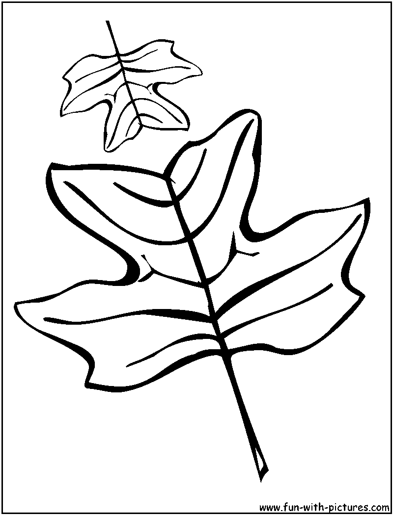 coloring pages oak leaf - photo#29