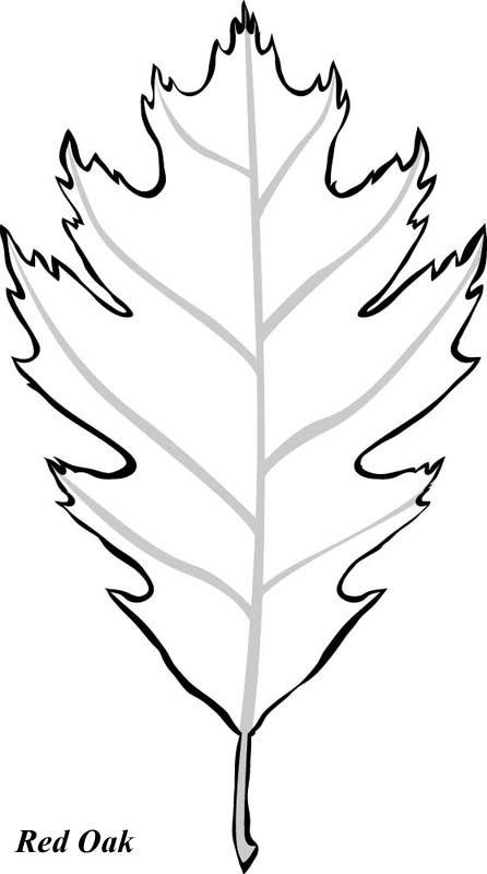 Oak Leaves Coloring Pages