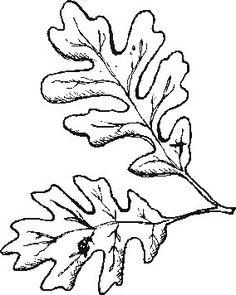 Oak Leaf And Acorn Drawing Oak Leaves Drawing | C...