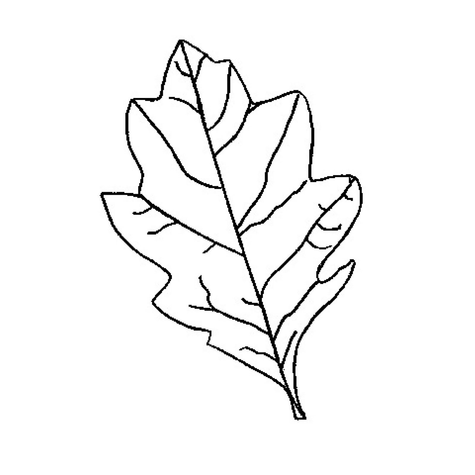 Oak Leaves Outline | Clipart Panda - Free Clipart Images