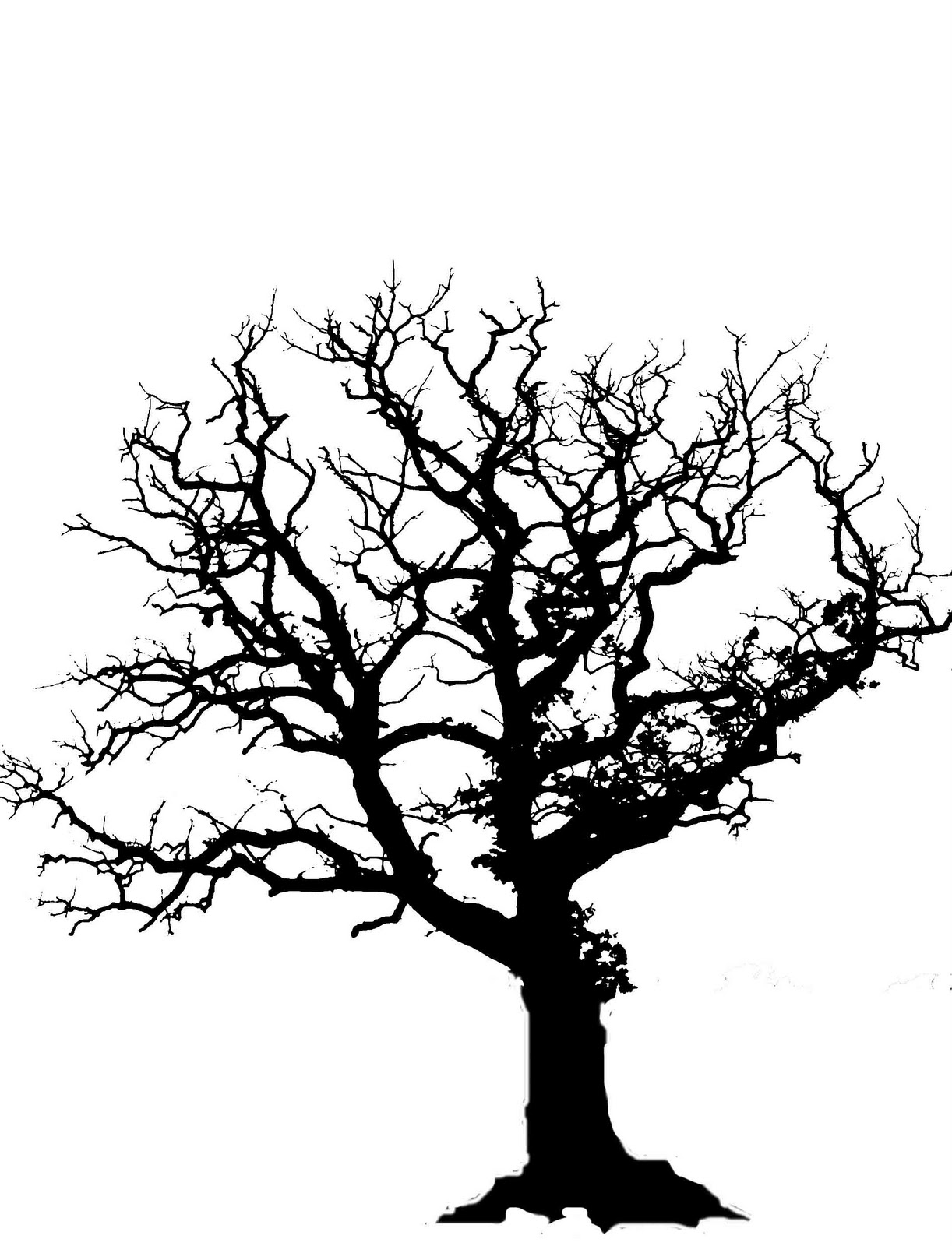 Acorn Tree Drawing Oak Tree Silhouette With