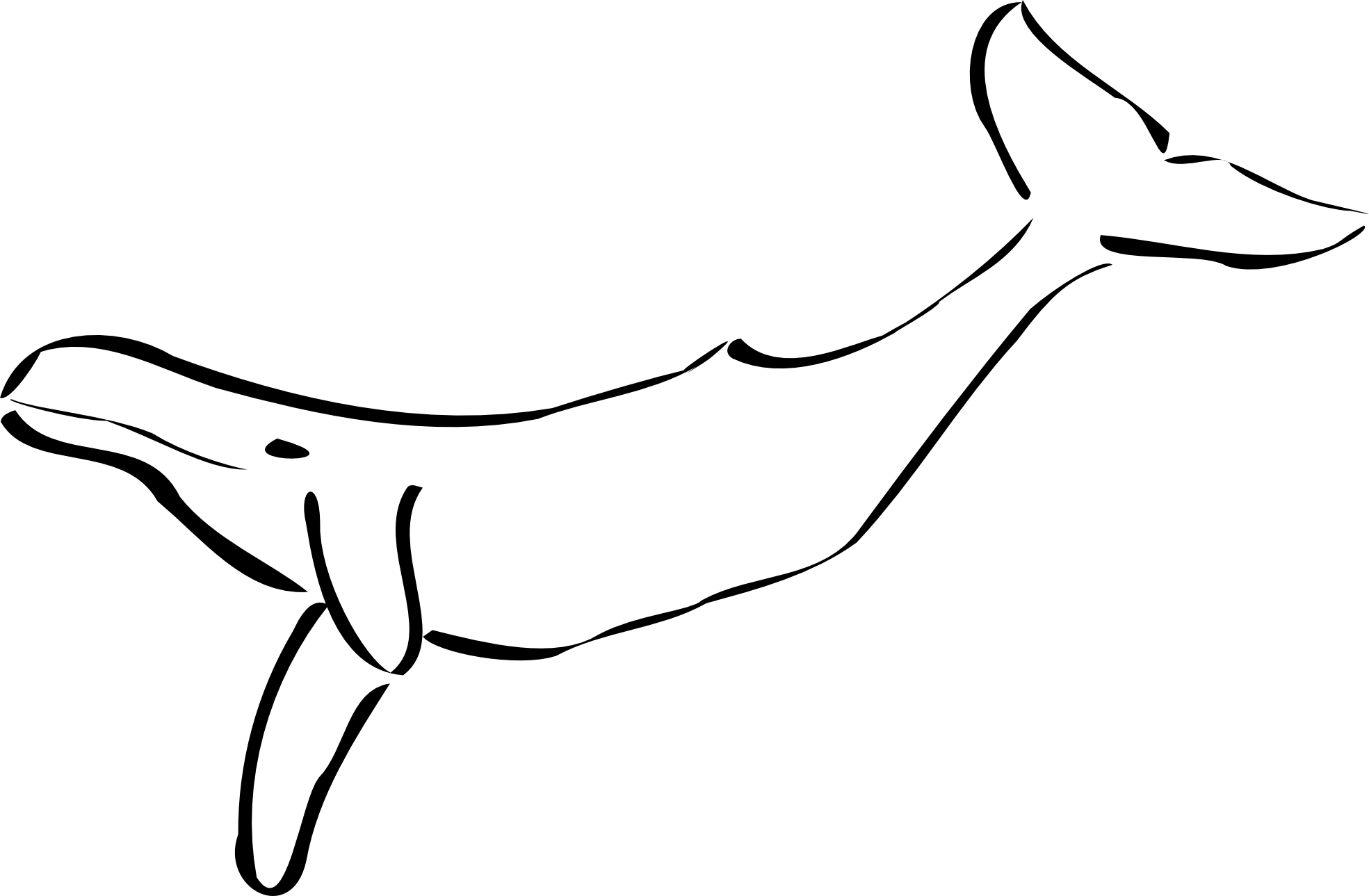 -and-white-walrus-clipart-black-and-white-whale black white line art    Ocean Clip Art Black And White