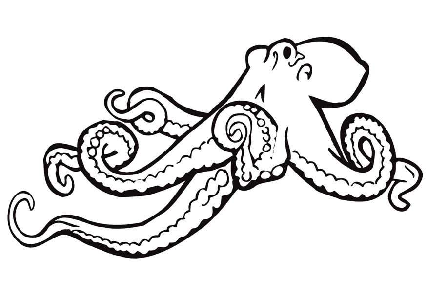 Free Octopus Drawings Octopus Coloring Page